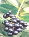 Фото - отруйні рослини