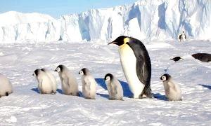 Південне сяйво, пінгвіни, підлідні річки та інші пам'ятки Антарктиди