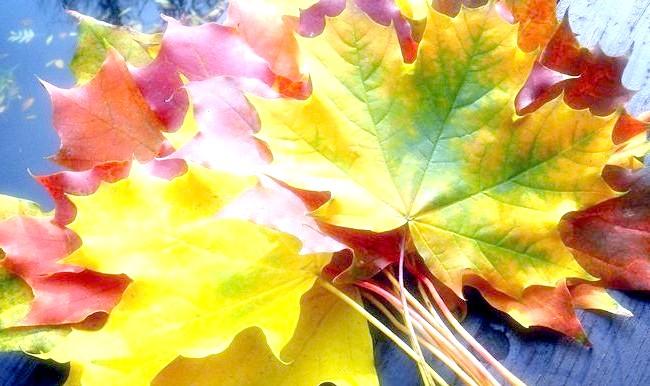 Фото - букет осіннього листя