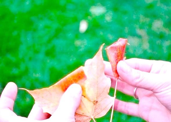 Фото - Як зробити троянду з осіннього листя майстер-клас 3
